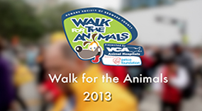 Walk for the Animals 2013